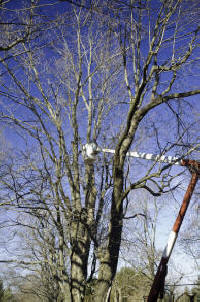 Tree service in Darien, CT